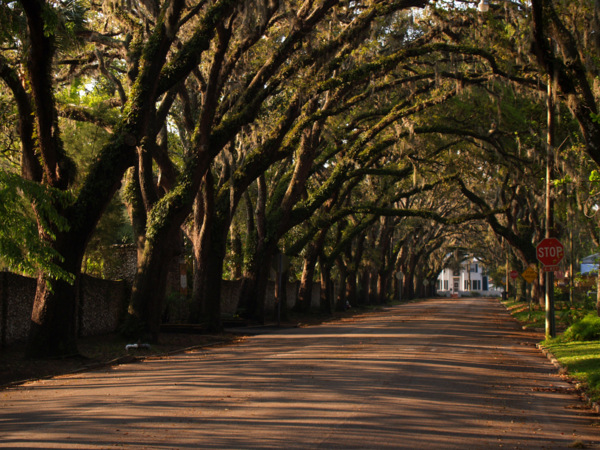 Magnolia Avenue for Sunday, July 15 and 22